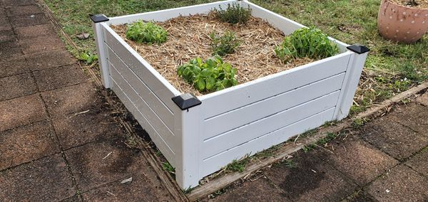 planter-box0A5B37D6-58EB-3CEA-BF1B-C72016693F8C.jpg